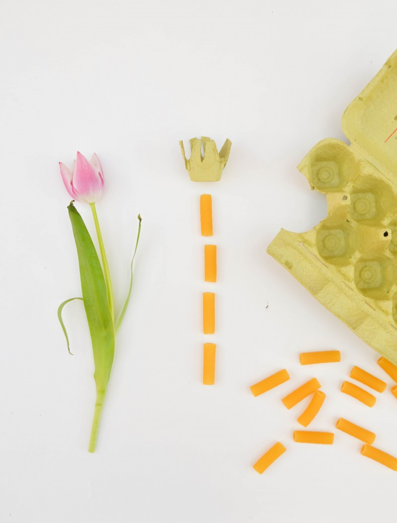 Tulpen, DIY