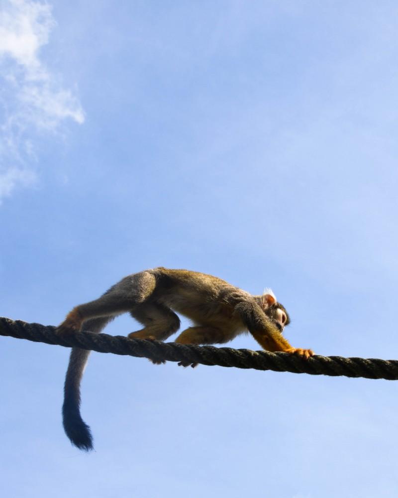 Affe, Reisen mit Kindern