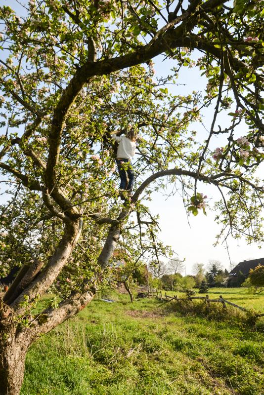 Apfelbäume, KLettern,