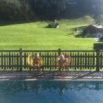 Bergurlaub mit Kindern. Plus eine wunderbar familienfreundliche Unterkunft in Leogang