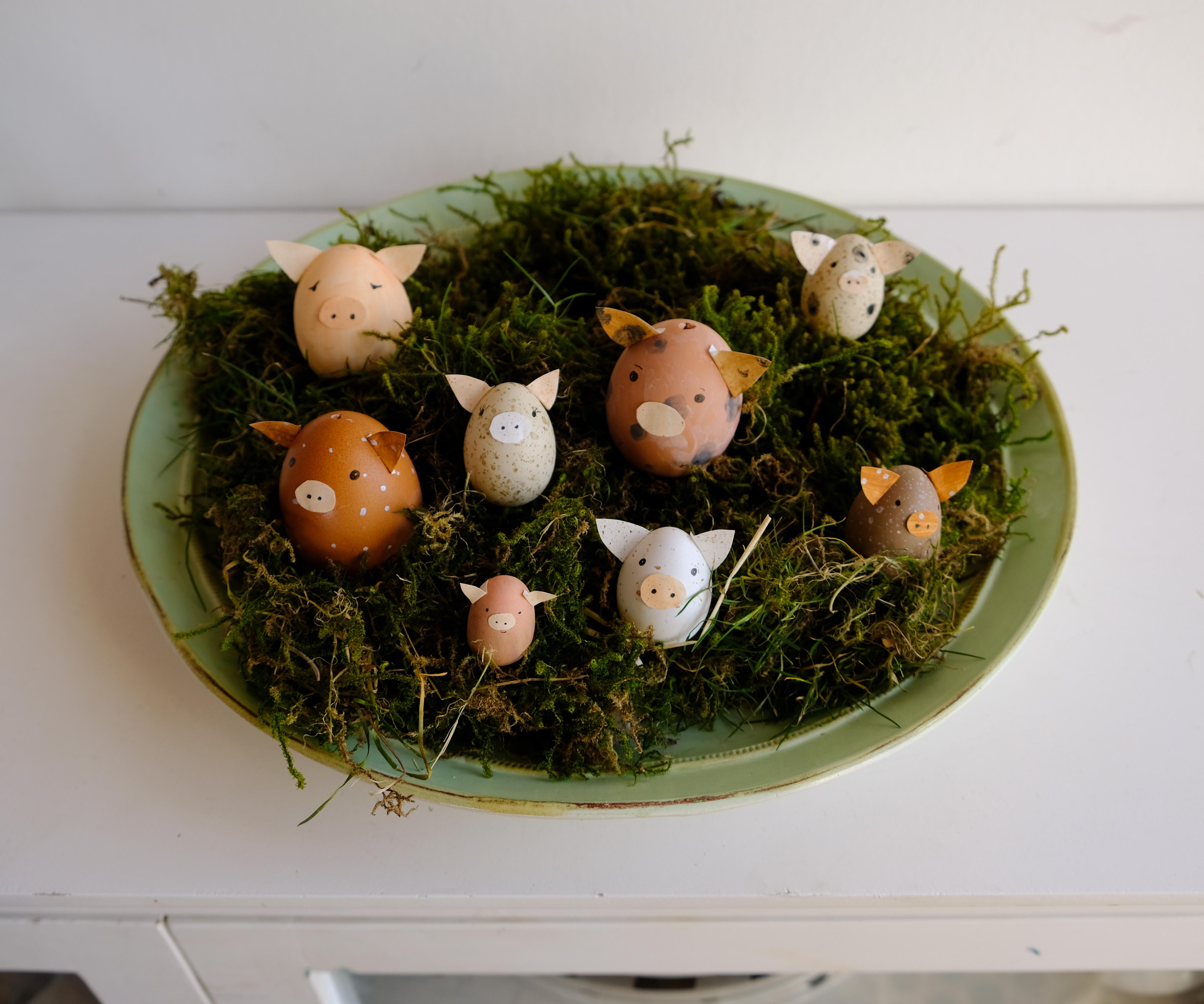 Schweine Eier, Ostern