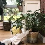 Die kleinen Dinge: Urban Jungle trotz Baby