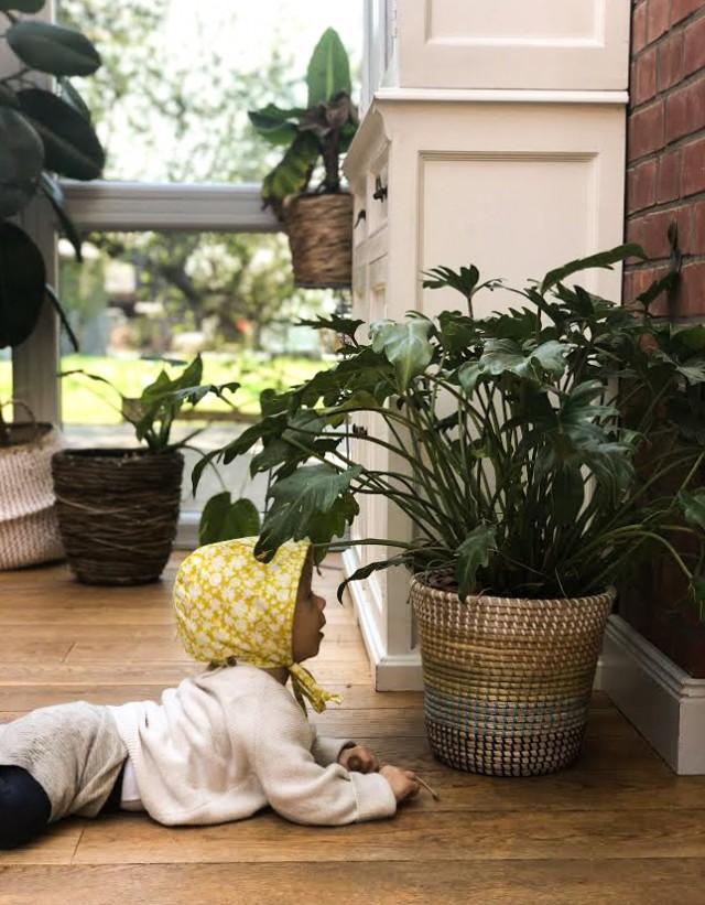 Urban Jungle, Blumen, Leben mit Kleinkind, Tipps,