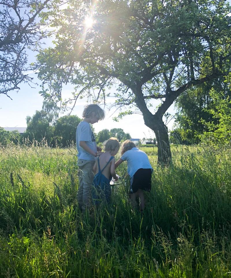 Schmetterlinge mit Kindern züchten, Raupen bestellen