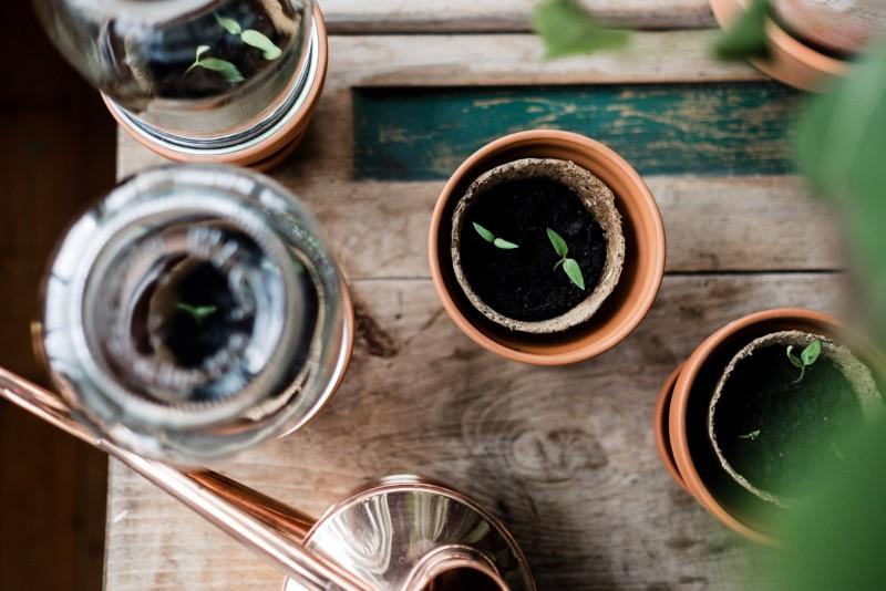 Traumgarten, Gemüse vorziehen