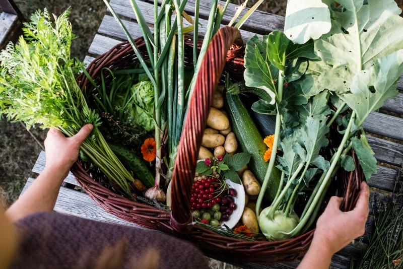 Traumgarten, Gemüse selbst anbauen