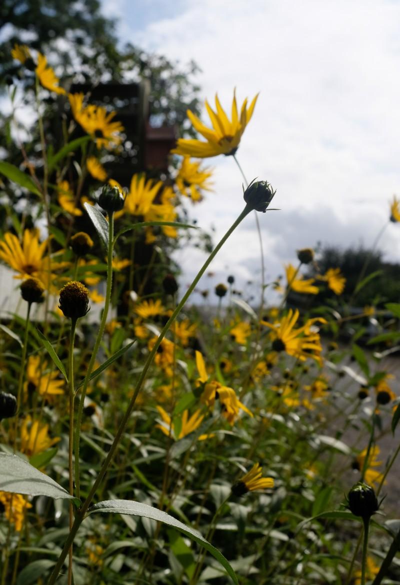 Gelb, Herbst, Mamaklamotten,